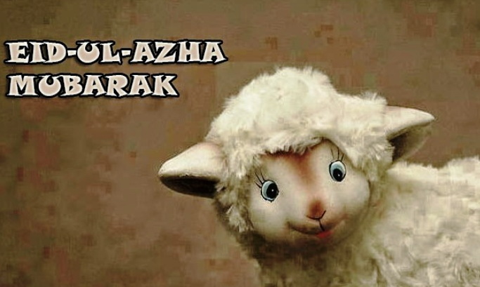 Eid ul Adha Mubarak with sheep photo