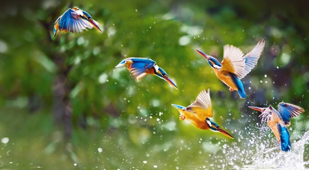 Cute bird plying in water hd wallpapers images
