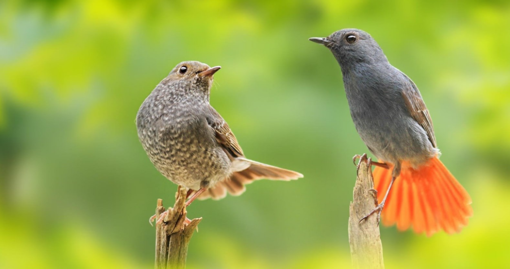 cute and beautiful birds hd wallpapers