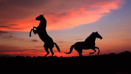 Horse images in evening