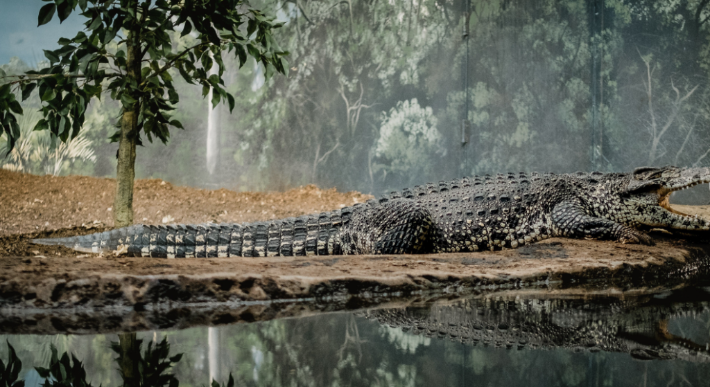 Alligator Wallpapers Hd