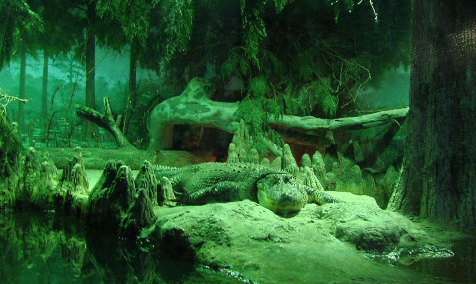 Alligator in Forest